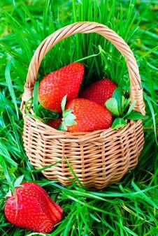 Free Fresh Strawberries Stock Photography - 18338172