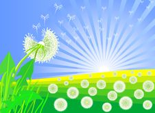 Free Vector Dandelions Against The Backdrop Of Sunrise Stock Photography - 18338192