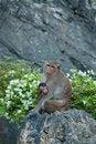 Free Monkey Family Stock Image - 18341131