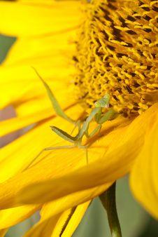 Free Grasshopper Stock Images - 18341274