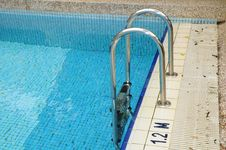 Free Chrome Ladder Of Swimming Pool Royalty Free Stock Photography - 18346267