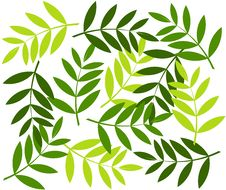 Free Green Leaf Background Royalty Free Stock Photography - 18347107