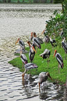 Free Painted Storks Royalty Free Stock Photo - 18348575