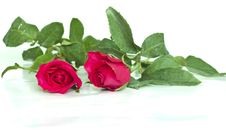 Free Two Roses Stock Photo - 18348870
