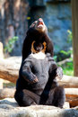 Free Black Bear Stock Photo - 18351670