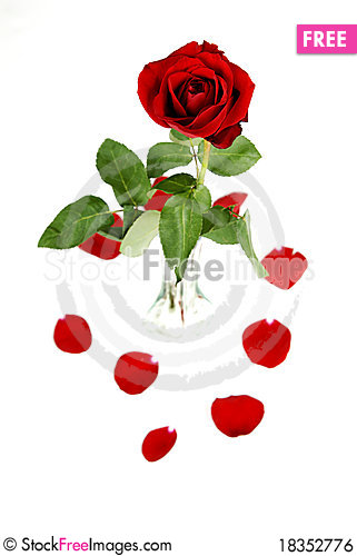 Free Roses In Vase With Petals On White Royalty Free Stock Image - 18352776