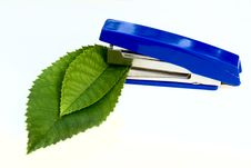 Stapler And Green Leaves Royalty Free Stock Photos