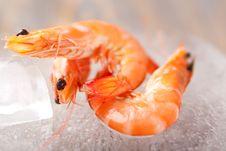 Free Fresh Shrimps Stock Photography - 18350792