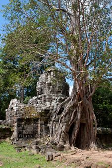 Free Tree On Angkor Ruins Stock Photos - 18351353