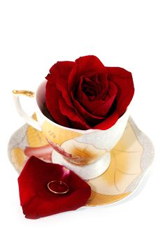 Free Rose In Cup Royalty Free Stock Photography - 18352207