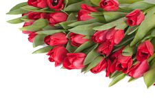 Free Tulips Royalty Free Stock Images - 18352979