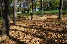 Free Autumn At The Park Stock Photography - 18353982