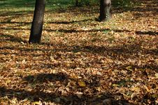 Free Fall Colors At The Park Stock Photos - 18354023