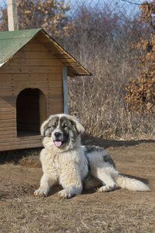 Free Leisure Dog Stock Photo - 18354430