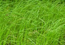 Free Grass Background Stock Image - 18354731