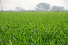Free A Green Cultivated Field Royalty Free Stock Image - 18357916