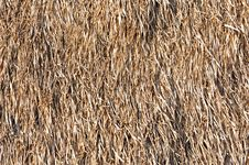 Free Texture Of Grass Roof Stock Photo - 18358170