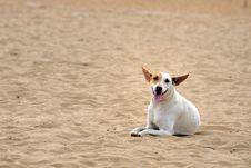 Free Dog Royalty Free Stock Photo - 18358295