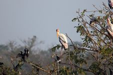 Free Painted Stork Royalty Free Stock Photography - 18358347
