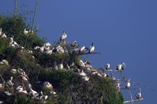 Free Spot Billed Pelican Stock Image - 18358431