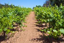 Free California Vineyard Stock Images - 18359944