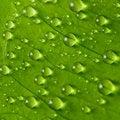 Free Raindrops Royalty Free Stock Photos - 18363408