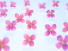 Free Pink Flowers Stock Images - 18360074