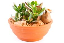 Succulents Royalty Free Stock Photos