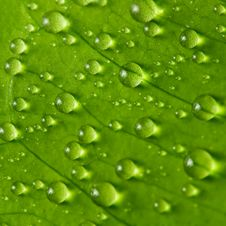 Free Raindrops Royalty Free Stock Photos - 18363408