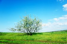 Free Green Field And Trees Royalty Free Stock Photos - 18369028