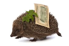 Free Hedgehog With Dollars Profit Royalty Free Stock Image - 18369046