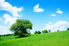 Free Green Field And Trees Royalty Free Stock Images - 18369089