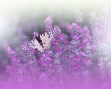 Beautiful Nature Background.Abstract Wallpaper.Celebration.Artistic Spring Flowers.Art Design.Violet Color.Summer, Love.Butterfly. Royalty Free Stock Image