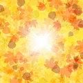 Free Autumn Leaves Background. EPS 8 Royalty Free Stock Photography - 18374747