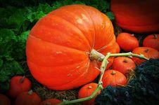 Free The Big Pumpkin Stock Photos - 18373413