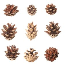Free Set Of Pine Cones Royalty Free Stock Image - 18373466