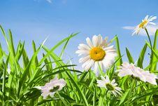 Free Daisywheel Stock Image - 18376911