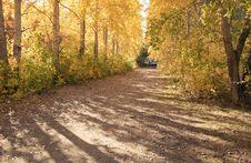 Free Autumn Landscape Royalty Free Stock Photography - 18378157