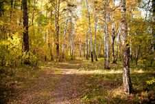 Free Autumn Wood Royalty Free Stock Photography - 18378337