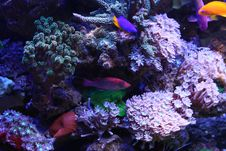 Free Reef And Coral Stock Photos - 18379013