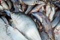 Free Raw Fish Stock Photos - 18389363