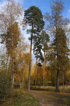Free Autumn Wood Stock Photo - 18380670
