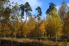 Free Autumn Wood Stock Photo - 18380760