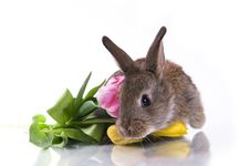 Free Little Rabbit And Flowers Stock Photos - 18381803
