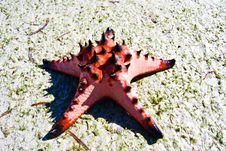 Free Starfish, Sea, Thailand. Royalty Free Stock Photography - 18382037