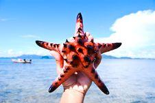 Free Starfish, Sea, Thailand. Royalty Free Stock Photos - 18382238