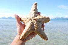 Free Starfish, Sea, Thailand. Royalty Free Stock Photos - 18382388