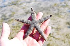 Free Starfish, Sea, Thailand. Stock Photography - 18382562