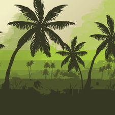 Free Palm Tree Stock Image - 18383321