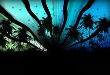 Free Palm Tree Stock Photography - 18383372